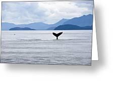 Humpback Whale Megaptera Novaeangliae Greeting Card by James Forte