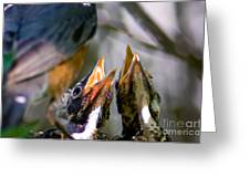 Hungry Baby Robins Greeting Card by Terry Elniski