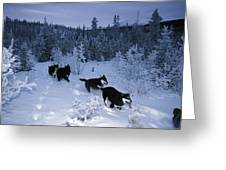 Huskie Pups Out For A Run In The Snow Greeting Card by Paul Nicklen