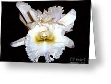 Hybrid White Orchid Greeting Card by Merton Allen