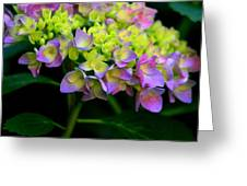 Hydrangea Beauty Greeting Card by Valia Bradshaw