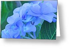 Hydrangea Blue Greeting Card by Becky Lodes