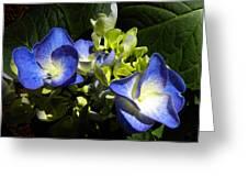 Hydrangea Duo Greeting Card by Sandi OReilly
