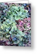 Hydrangea Flower Background Greeting Card by Jane Rix