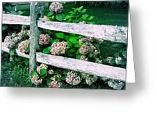 Hydrangeas Greeting Card by JAMART Photography