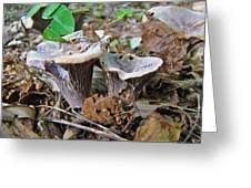 Hygrophorus Caprinus Mushrooms Greeting Card by Mother Nature