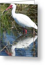 Ibis At Local Pond 2 Greeting Card by Lynda Dawson-Youngclaus