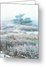 Ice Tree Shenandoah National Park Greeting Card by Thomas R Fletcher