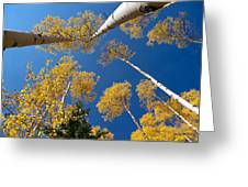 Iconic Aspen Photo Greeting Card by Stephen  Johnson