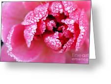Icy rose Greeting Card by Elena Elisseeva