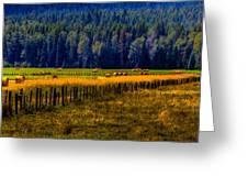 Idaho Hay Bales Greeting Card by David Patterson