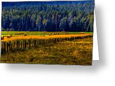 Idaho Hay Bales  Greeting Card by David Patterson