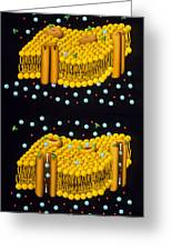 Illustration Of Ion Chanels In Plasma Membrane Greeting Card by Francis Leroy, Biocosmos