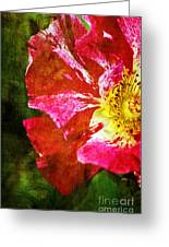 In The Blink Of An Eye Greeting Card by Catherine Fenner