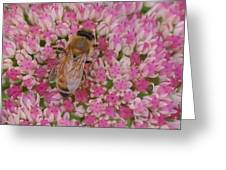 In The Pink Greeting Card by Ronda Broatch