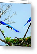 In The Wild Greeting Card by Karen Wiles