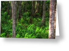 In The Woods Greeting Card by Ronald T Williams