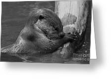 In Thought Greeting Card by Gary Bridger