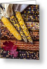 Indian Corn Greeting Card by Garry Gay