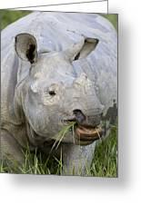 Indian Rhinoceros Grazing Kaziranga Greeting Card by Suzi Eszterhas