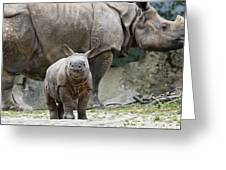 Indian Rhinoceros Rhinoceros Unicornis Greeting Card by Konrad Wothe