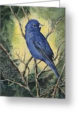 Indigo Bunting Greeting Card by Sam Sidders