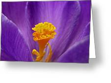 Inside A Crocus Greeting Card by Mary Lane