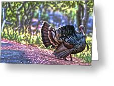 Intense Tom Turkey Display Greeting Card by Gregory Scott
