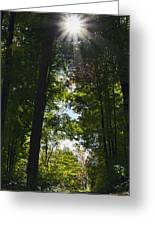Into The Light Greeting Card by Peter Chilelli
