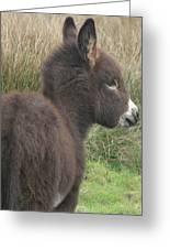 Irish Donkey Foal Greeting Card by Joseph Doyle