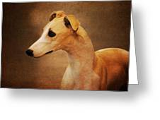 Italian Greyhound Greeting Card by Jai Johnson