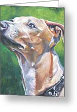 Italian Greyhound Greeting Card by Lee Ann Shepard