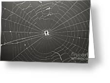 Itsy Bitsy Spider Greeting Card by Leslie Leda