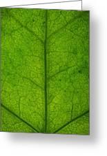 Ivy Leaf Greeting Card by Steve Gadomski