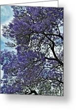 Jacaranda Clouds Greeting Card by Gwyn Newcombe