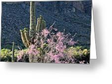 Jacarandas And Saguaros Greeting Card by Nathan Mccreery