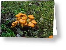 Jack Olantern Mushrooms 12 Greeting Card by Douglas Barnett