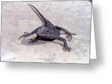 Jacky Lizard  Greeting Card by Joanne Kocwin