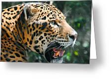 Jaguar In May Greeting Card by DiDi Higginbotham