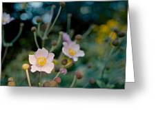 Japanese Anemones Greeting Card by Marcio Faustino