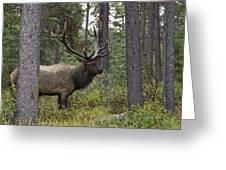 Jasper National Park, Jasper, Alberta Greeting Card by Philippe Widling