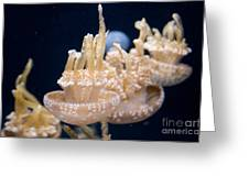 Jellies Greeting Card by Carol Ailles