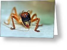 Jiminy Cricket Greeting Card by Kaye Menner