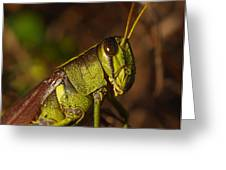 Jiminy Cricket Never Looked This Good Greeting Card by Billy  Griffis Jr