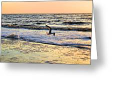 Jonathan Livingston Seagull Greeting Card by Kristin Elmquist