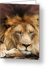 Joseph Greeting Card by Big Cat Rescue