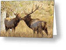 Junior Meets Bull Elk Greeting Card by Robert Frederick