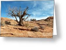 Juniper On Slickrock Greeting Card by Bob and Nancy Kendrick