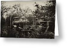 Junkyard Dogs IIi Greeting Card by Off The Beaten Path Photography - Andrew Alexander