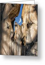 Just Passing By Greeting Card by Sandra Bronstein